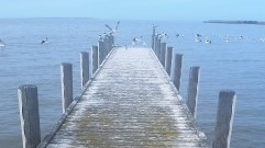 long jetty with pelicans at sea